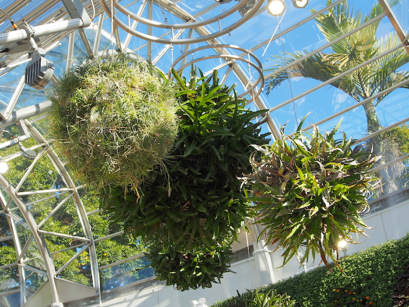 Hanging foliage balls inside The Calyx Sydney RBG