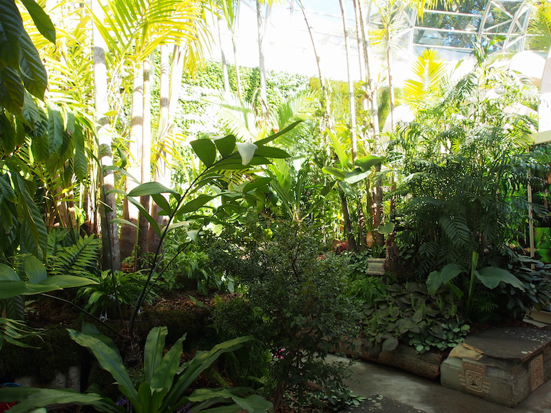 Rainforest displays inside The Calyx, Sydney RBG