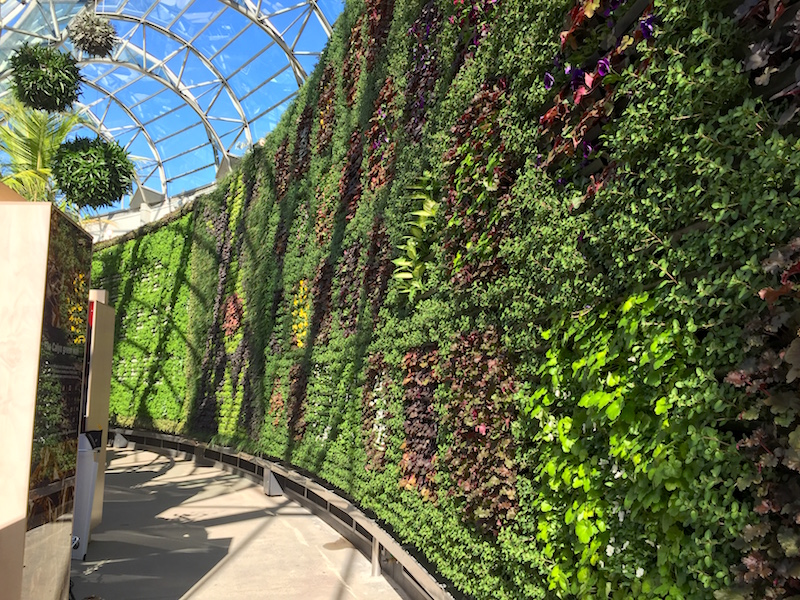 The Calyx has a huge vertical garden of 18,000 plants, Sydney RBG