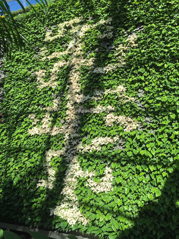 Vertical garden wall picture in The Calyx Sydney RBG