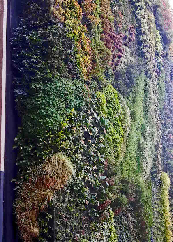 Caixa Forum Greenwall, Madrid, close up showing patches where plants have died back and replaced