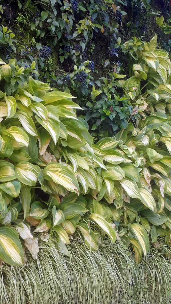 Caixa Forum Greenwall, Madrid, plants with variegation and berries