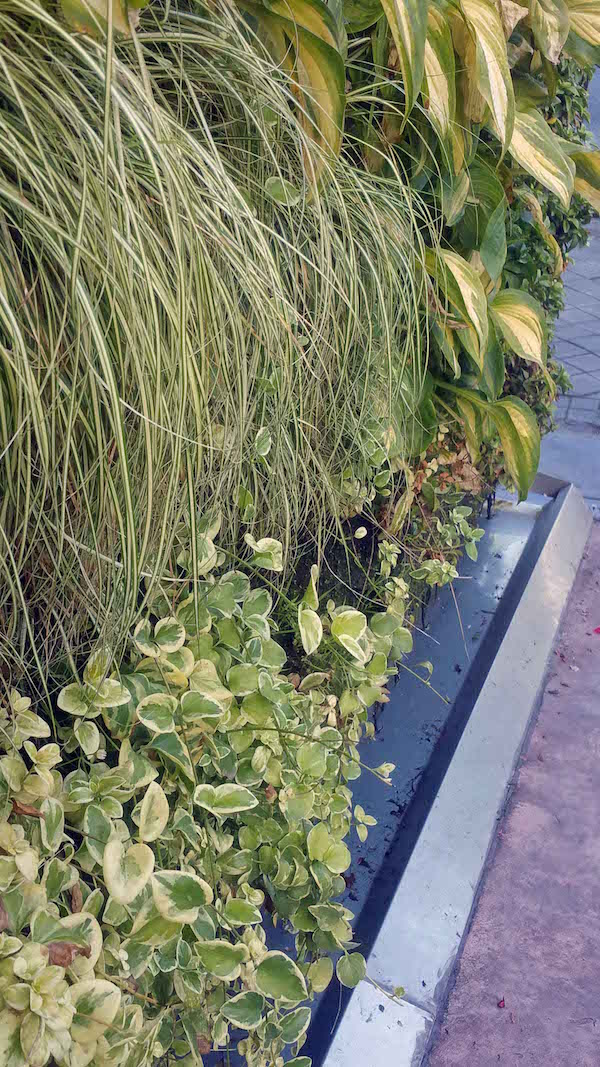 Caixa Forum Greenwall, Madrid, with drip tray at base for water reticulation