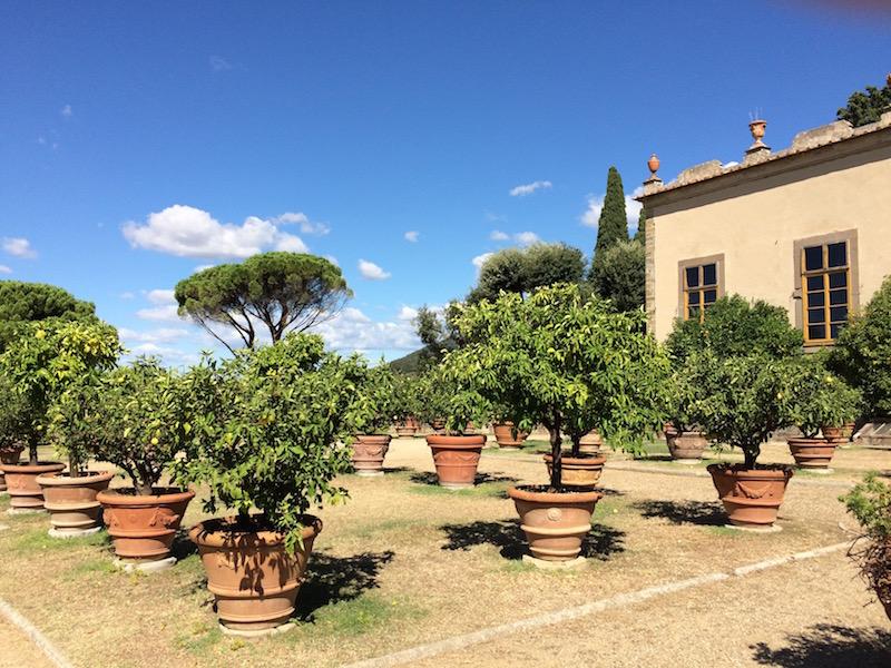 Limonarium, Villa Gamberaia