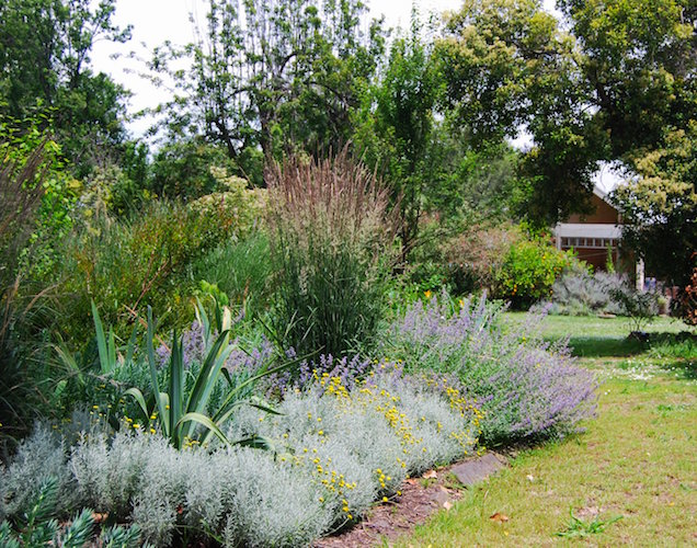 Perennials at Chesterfield garden, Geelong. Design Stephen Read Landscape Design