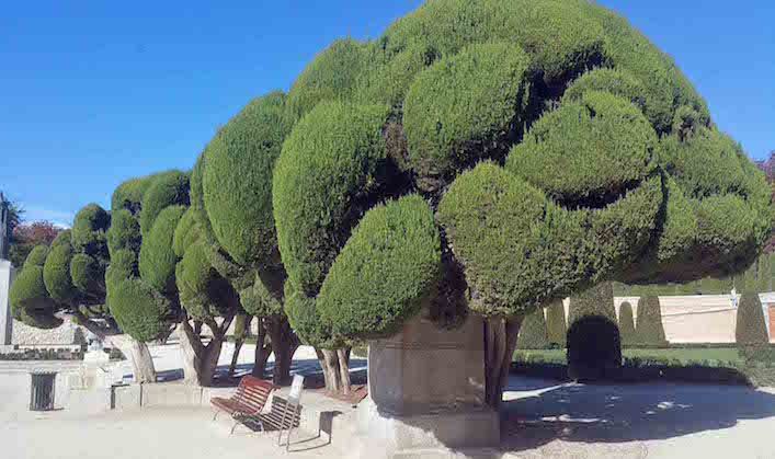 Retiro Cloud pruned cypress