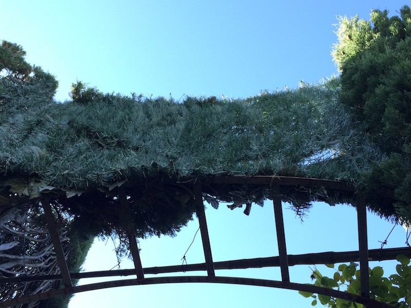 Ugly plastic sheets of leaves try to fill gaps in hedges at Villa Gamberaia