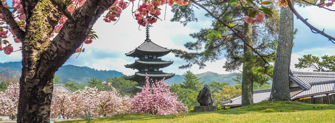 Cherry Blossom And The Art Of Japanese Garden